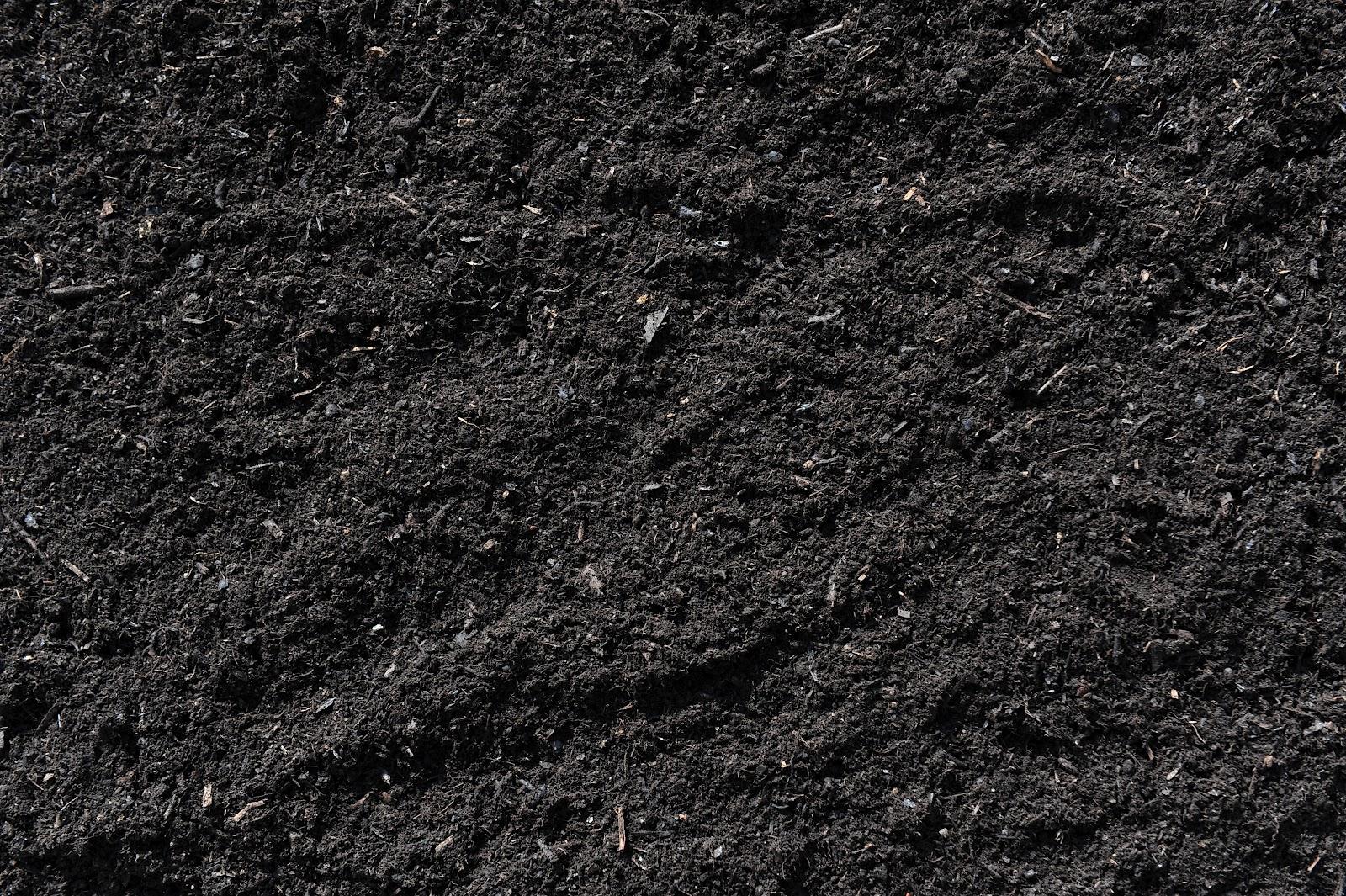 Black earth andr taillefer ltd for Black garden soil
